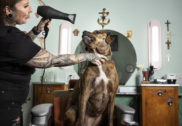 Photo of woman drying dog's hair